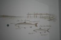Pohjolan pirtit, seinämaalaus (2).JPG